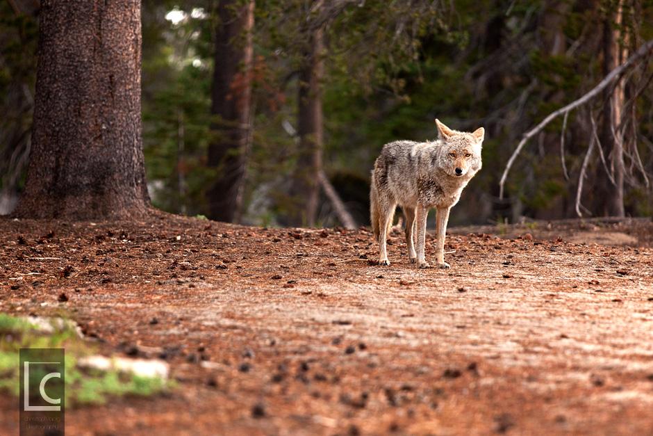 2013_06_10_Yosemite_1056 Kopie