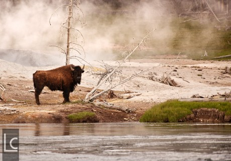 2013_06_21_4729_Yellowstone_1 Kopie